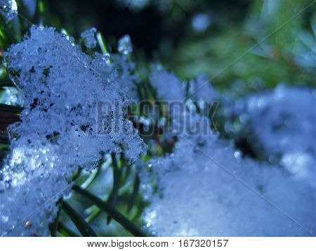 photos with a winter backdrop of icy fir needles fir-tree branches with sparkling snow icicles as the source for design, print, photo shop