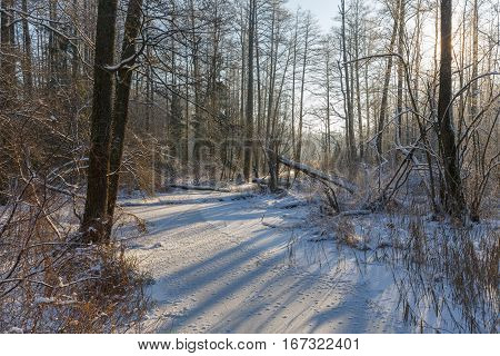 Winter landscape of frozen Lesna River in sun with dry reed snow wrapped in foreground, Bialowieza Forest, Poland, Europe