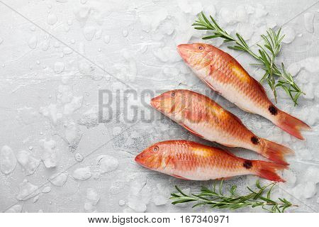 Fresh red mullet fish with rosemary on icy stone background