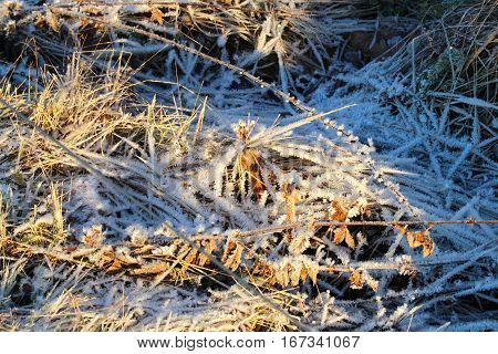Winter Soluble expression on the meadow in January