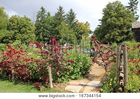 The landscape with trail in the blooming garden
