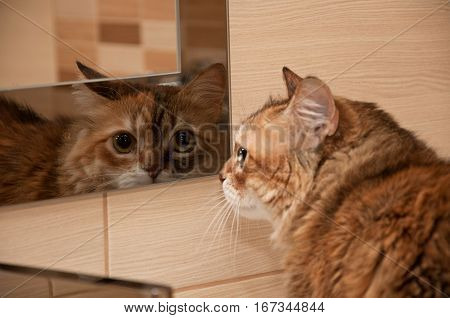Cat Looking In The Mirror