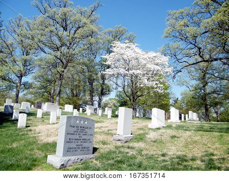 Arlington, USA - April 9, 2010: Cherry blossom tree on the Arlington National Cemetery.
