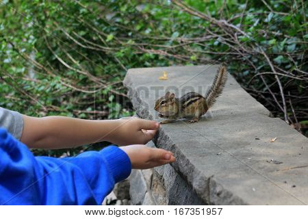 The chipmunk eating seeds from children hands