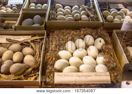 Show Case In Natural History Museum With Nests Of Eggs