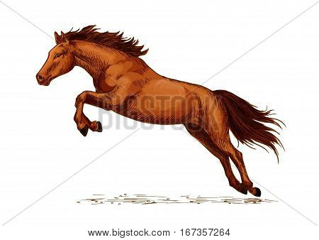 Jumping stallion or horse, equine sport sketch. Racehorse mustang or broodmare, purebred wild chestnut mare. Horsey or equestrian animal sport with jump over obstacles like oxer or cavaletti, sport club or show,