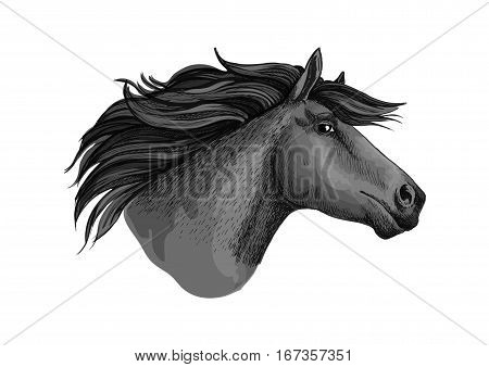 Mare horse or mustang head sketch. Broodmare or equine, horsey animal, dapple gray foal or filly or marish with curvy mane and long ears. Equestrian club or hippodrome sport, feral or domestic mammal, racehorse theme poster