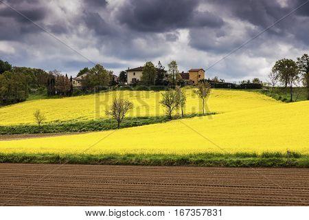 Tuscany landscape - canola field and dramatic sky. Tuscany Italy.