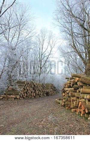 Big piles of chopped fuel wood in a winter forest