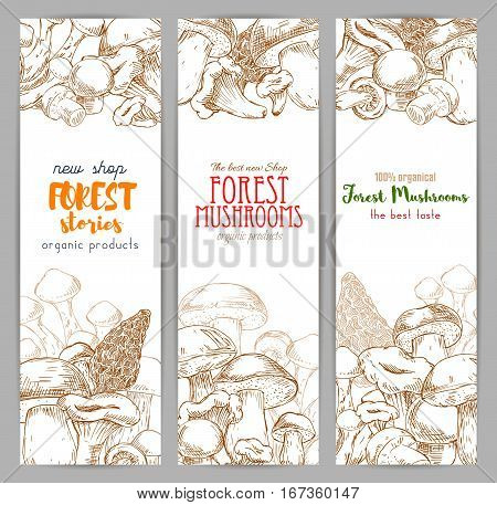 Autumn forest banner with mushroom sketch. Drawing of wood nature like russule and morchella, penny bun or cep, porcino or porcini, boletus, birch and red-capped edible fungus, chantrelle or girolle. Vegetarian cafe or restaurant.