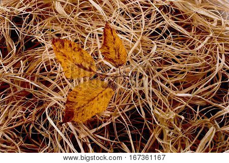 Dry Leaves As An Autumn On A Straw Background