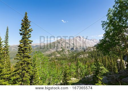 Long pine tree peaks  against rocky mountain