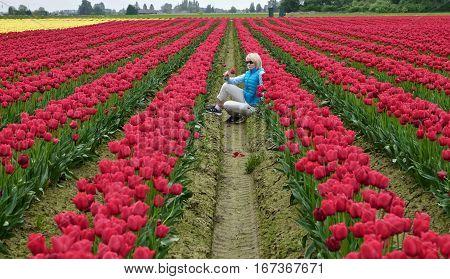 Woman in the colorful tulip fields. Mount Vernon Tulip Festival. Tulip Town. Seattle. Washington. United States.