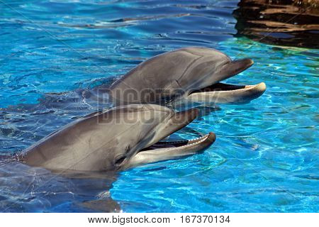 The dolphins in the water San DiegoCalifornia.