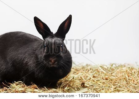 Curious rabbit on hay background. Animal looking front