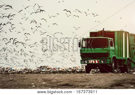 Green garbage truck on a landfill with seagulls all around