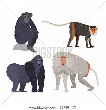 Different types of monkeys rare animal vector set. Cartoon macaque nature primate character. Wild zoo ape chimpanzee. Wildlife jungle animal,