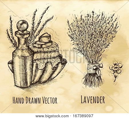 Herbal cosmetic still life with bunch of lavender flowers, bottle and soap. Hand drawn engraved illustration. Vintage drawing in sketch style. Aromatic perfumery plant