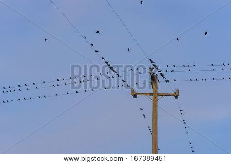 Birds perch on telephone wires and fly away
