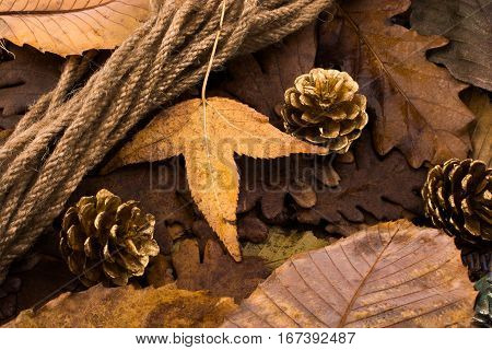 Pine cones placed on a background covered with dry leaves