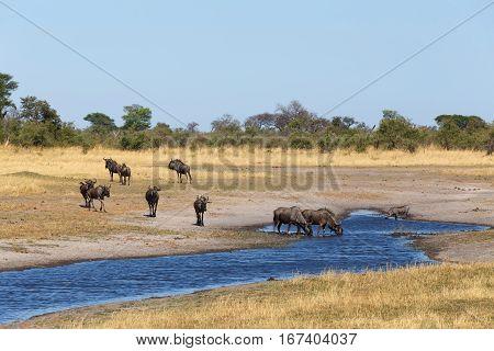 Gnu, Wildebeest Africa Safari Wildlife And Wilderness