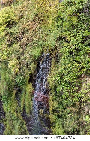 Risco Waterfall of the Twenty-five Fountains Levada hiking trail Madeira Portugal