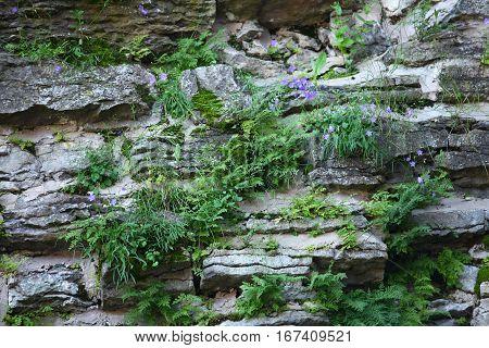 on stones grow flowers Amazing viable plants grow on rocks