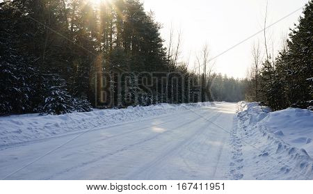 Winter background. winter forest. Sunny winter day. The road in a pine forest. . iridescent rays of the sun. Nature.