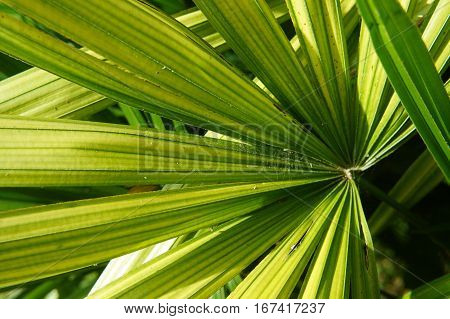 green palm leaf in close-up shooting carved