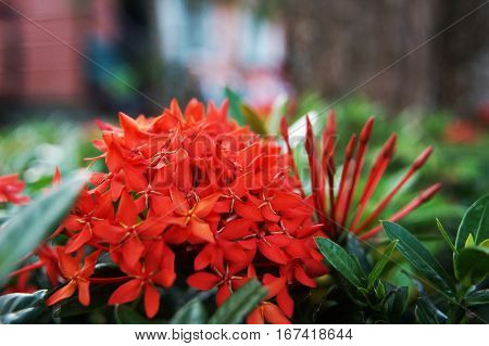 Red Exotic Flowers In Thailand