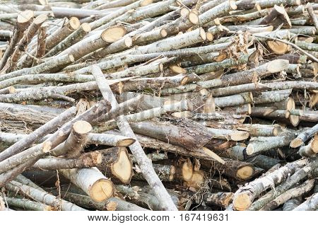 Stack of cut tree branches for home fireplace.