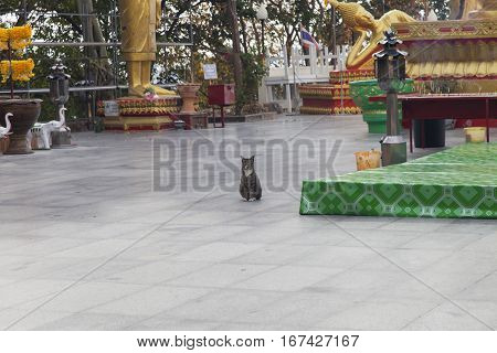 The Buddhist cat sits in the Buddhist temple