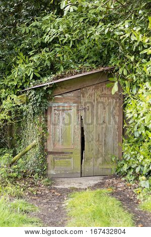 Small old wooden shed mostly covered by overgrown vegetation including ivy