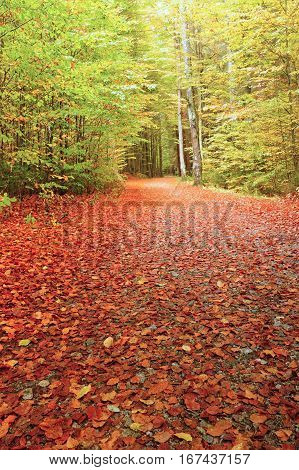 Autumn road leading misty forest with fallen leaves