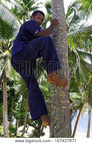 Indigenous Fijian Man Demonstrates How To Climb Up On Coconut Tree