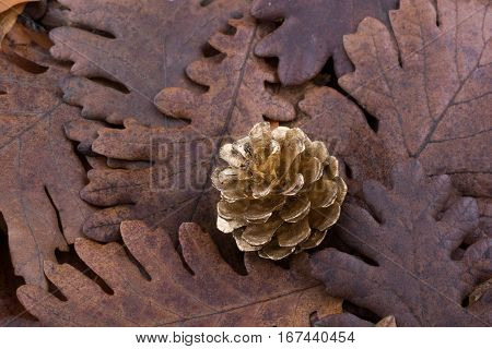 Pine Cone On A Background Covered With Dry Leaves