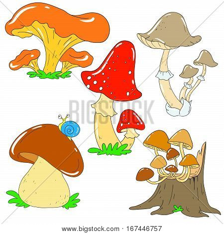 Collection of forest mushrooms. Chanterelle mushroom toadstool white fungus. Mycelium Vector Mushroom isolated