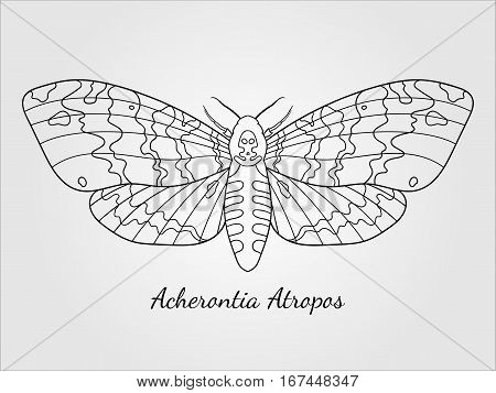 Line art dead head moth. Elegant vector illustration for coloring, tattoo desing, t-shirt and so on.