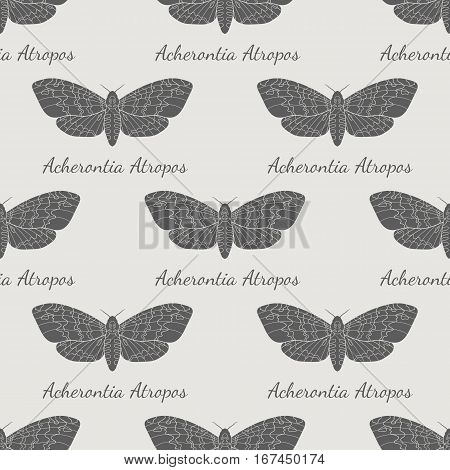 Line art dead head moths pattern. Modern vector background with words