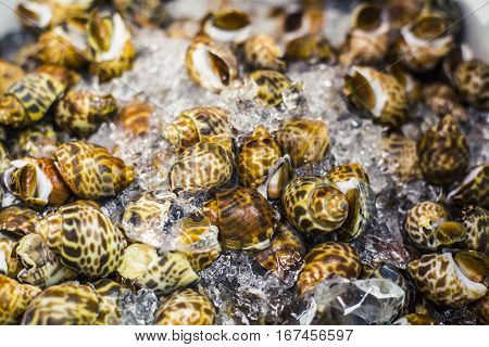 Whelks On Ice