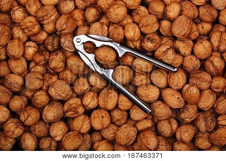 Fresh natural background walnuts and nutcracker healthy