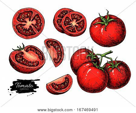 Tomato vector drawing set. Isolated tomato, sliced piece vegetables on branch. Artistic style illustration. Detailed vegetarian food sketch. Farm market product. Great for label, banner, poster