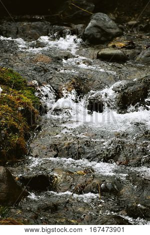 Close view on cold and clean water of mountain river runs through stones between shores covered with moss in winter forest