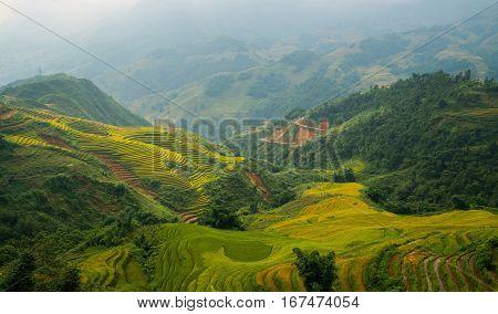Terraced rice field landscape in Sapa Vietnam.