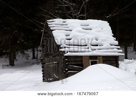 Old wooden hut covered with new-fallen snow in winter forest at gray day. Ukraine Carpathian Mountains.