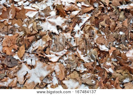 The snow that fell over the autumn leaves in the park.