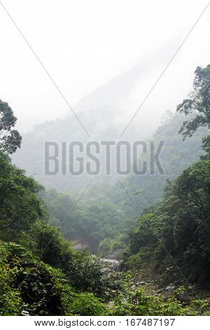Taiwan primeval forest with fog. Jungle in a cloudy day