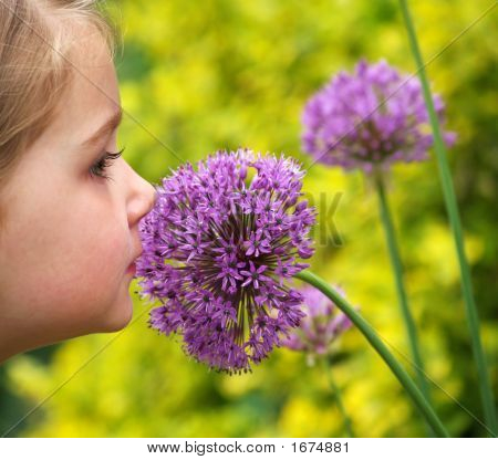 young girl smelling a purple allium (alliaceae) flower poster