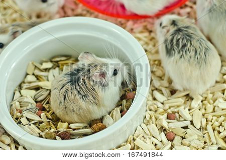 Hamsters eating in cup,Hamsters eating have fun.