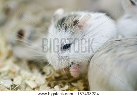 Hamsters Eating